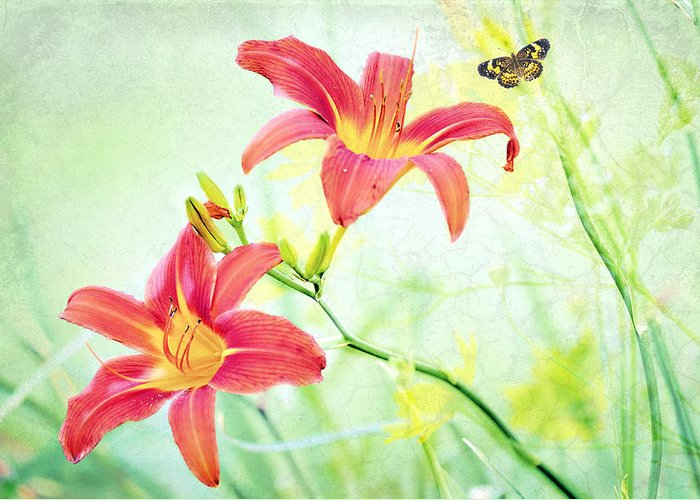 Daylily Greeting Card featuring the photograph Day Lily Delight by Bonnie Barry