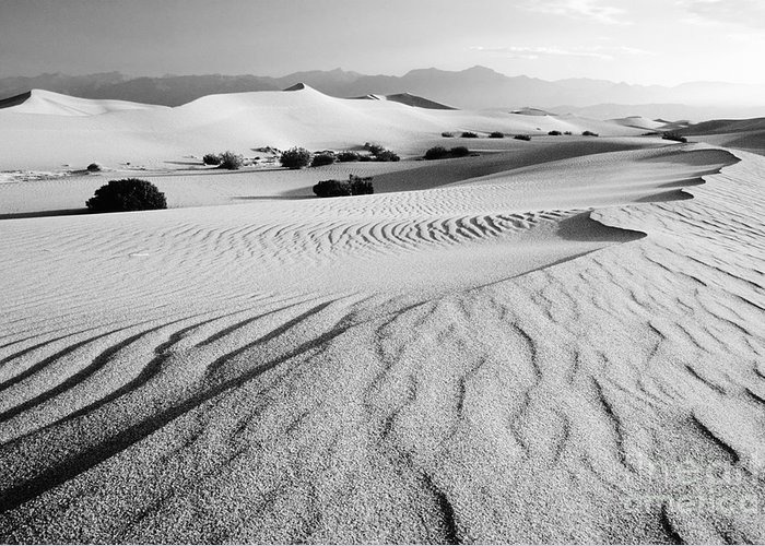 Sand Dunes Greeting Card featuring the photograph Death Valley Dunes 11 by Bob Christopher
