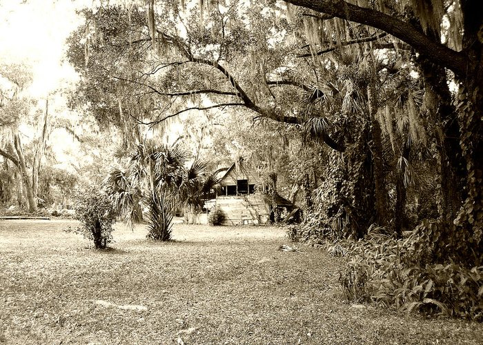 Shed Greeting Card featuring the photograph Deep South by Nina Fosdick
