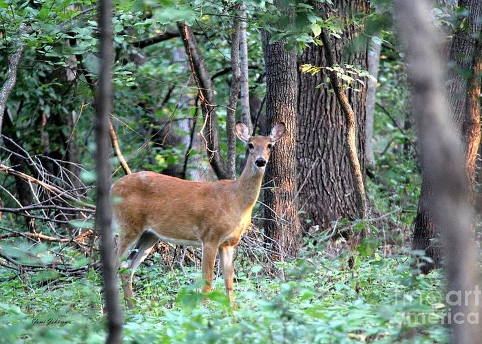 Deer In The Wood Photograph By Yumi Johnson