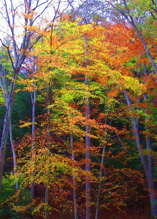 Fall Greeting Card featuring the photograph Delicate Colors by Vijay Sharon Govender
