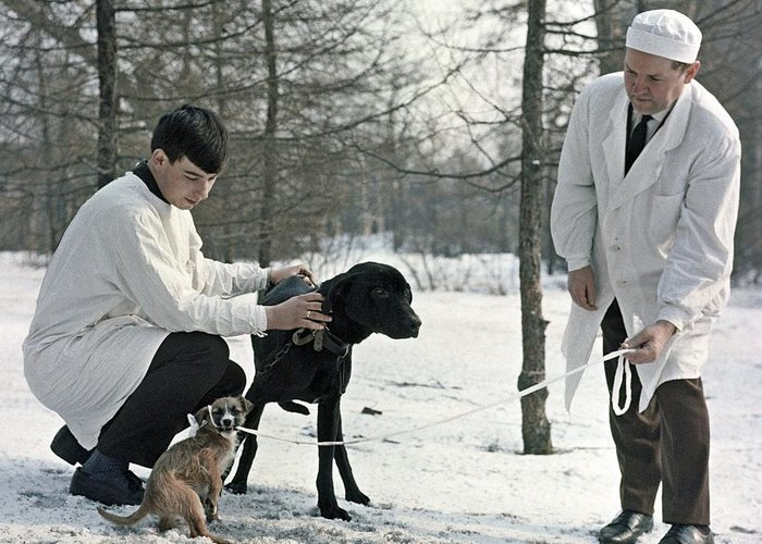 Vladimir Demikhov Greeting Card featuring the photograph Demikhov's Laboratory Dogs, 1967 by Ria Novosti