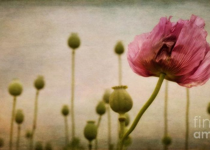 Papaver Greeting Card featuring the photograph Depth Of Poppy Field by Priska Wettstein