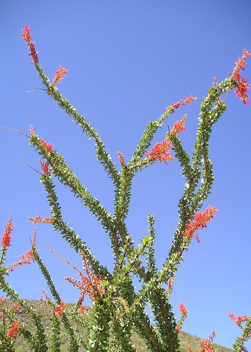 Water Greeting Card featuring the photograph Desert Bloom by