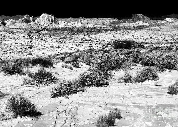 Desert Daze Greeting Card featuring the photograph Desert Daze by John Rizzuto