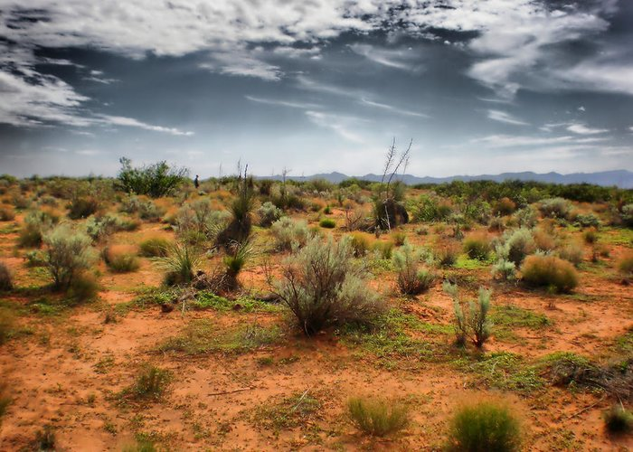 Desert Greeting Card featuring the photograph Desert Of New Mexico by Thomas MacPherson Jr