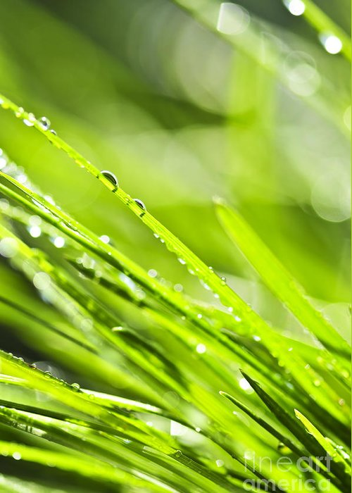 Grass Greeting Card featuring the photograph Dewy Green Grass by Elena Elisseeva