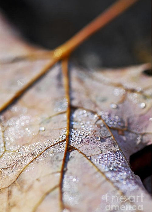 Leaf Greeting Card featuring the photograph Dewy Leaf by Elena Elisseeva