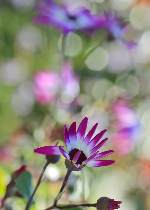 Bokeh Greeting Card featuring the photograph Different by Heidi Smith