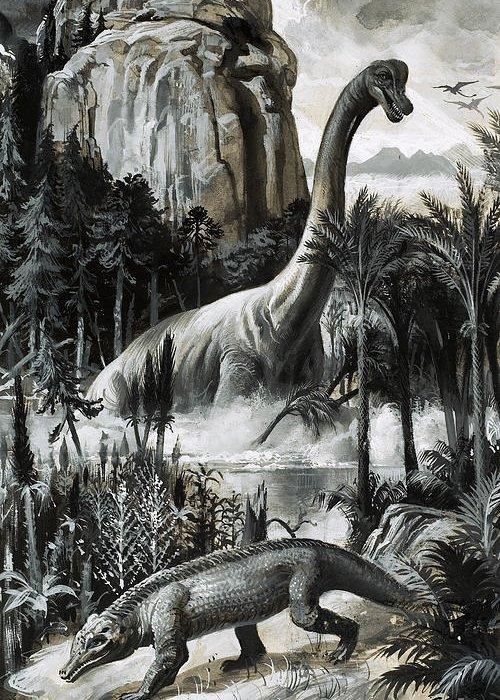 Dinosaur Illustration Greeting Cards