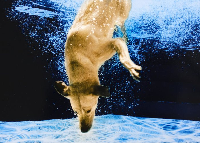 Dog Greeting Card featuring the photograph Diving Dog 3 by Jill Reger