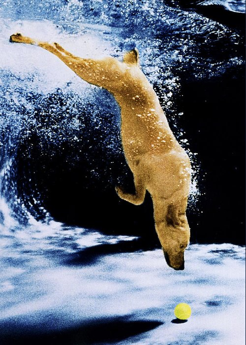 Dog Greeting Card featuring the photograph Diving Dog by Jill Reger