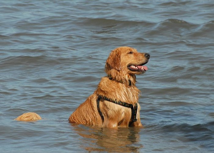 Golden Retriever Greeting Card featuring the photograph Dog 106 by Joyce StJames