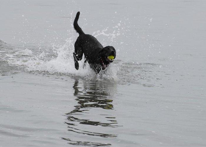 Labrador Retriever Greeting Card featuring the photograph Dog 82 by Joyce StJames