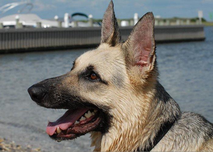 German Shepherd Greeting Card featuring the photograph Dog 94 by Joyce StJames