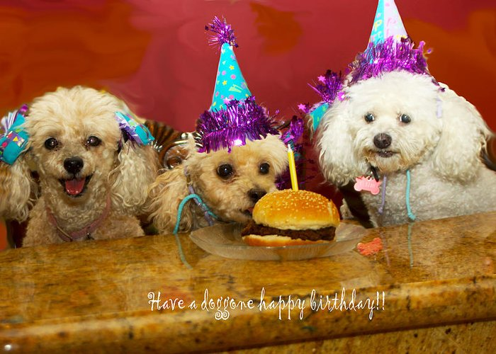 Dogs Greeting Card Featuring The Photograph Dog Birthday Party By Diana Haronis