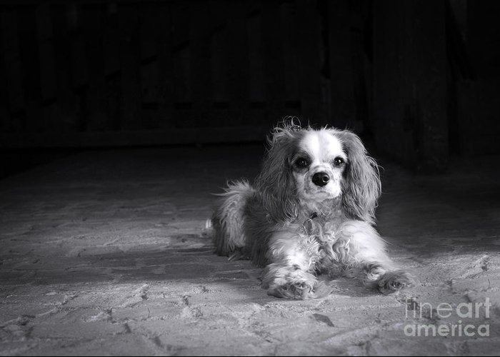 Adorable Greeting Card featuring the photograph Dog Black And White by Jane Rix