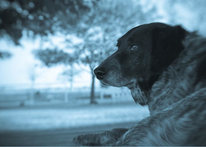 Black & White Greeting Card featuring the photograph Dog's Point Of View by Paul Roach