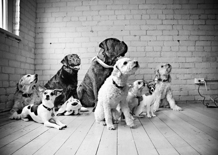 Dog Greeting Card featuring the photograph Dogs Watching At A Spot by Sumit Mehndiratta