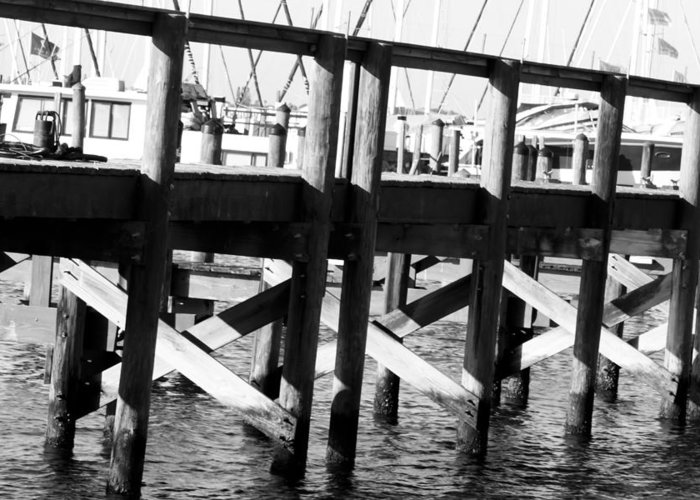 Palmetto Greeting Card featuring the photograph Down By The Marina by Nicholas Evans