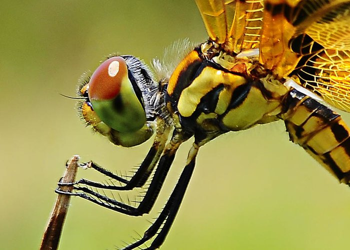 Dragon Fly Greeting Card featuring the photograph Dragon Fly by Michelle Armstrong