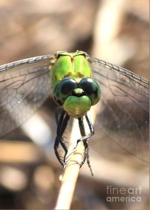 Dragonfly Greeting Card featuring the photograph Dragonfly Perspective by Carol Groenen
