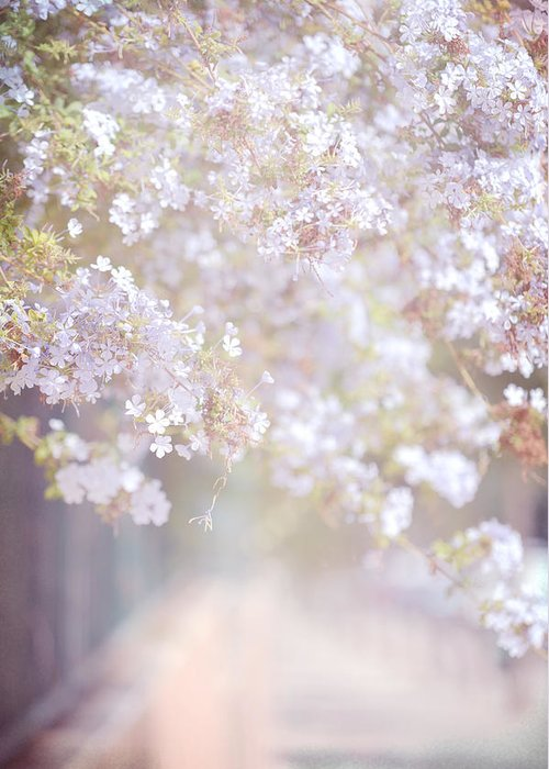 Jenny Rainbow Fine Art Photography Greeting Card featuring the photograph Dreaming Of Spring by Jenny Rainbow