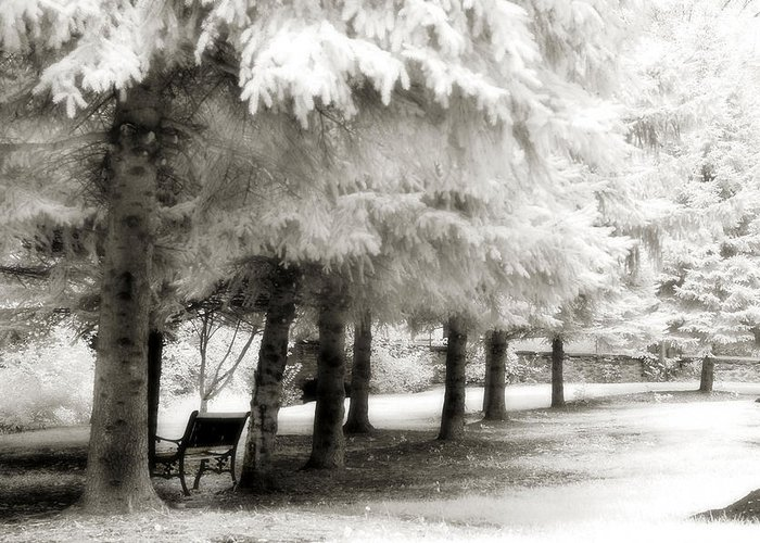 Infrared Trees Park Scene Greeting Card featuring the photograph Dreamy Surreal Infrared Park Bench Landscape by Kathy Fornal