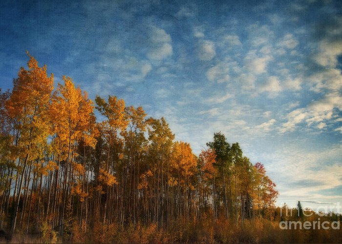 Fall Greeting Card featuring the photograph Dressed In Autumn Colors by Priska Wettstein
