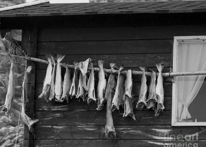 Fish Greeting Card featuring the photograph Dried Cod On A Line by Heiko Koehrer-Wagner