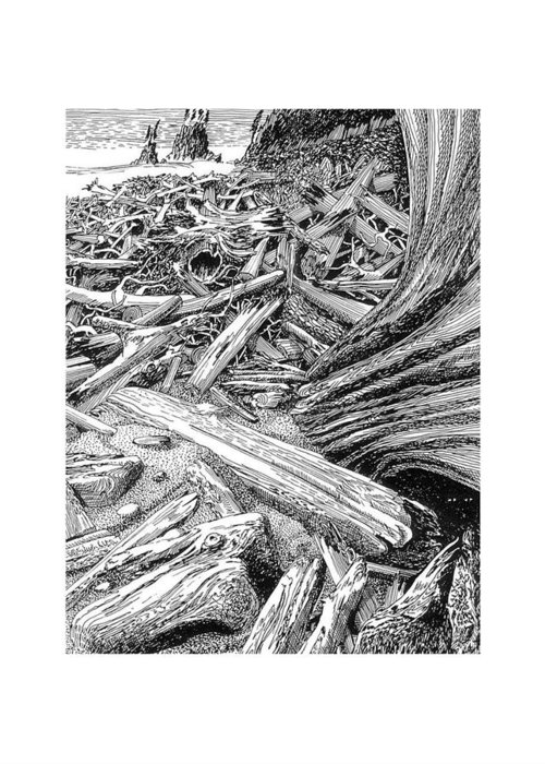 Pictures Of Driftwood And Black Cats. Mysterious Artistic Lifestyle Objects. Images Of Happy Pets Hiding In The Driftwood. Art Of The West Coast And Collecting Driftwood. Art Of Your Adventurous Lifestyle. Greeting Card featuring the drawing Driftwood Black Cat by Jack Pumphrey