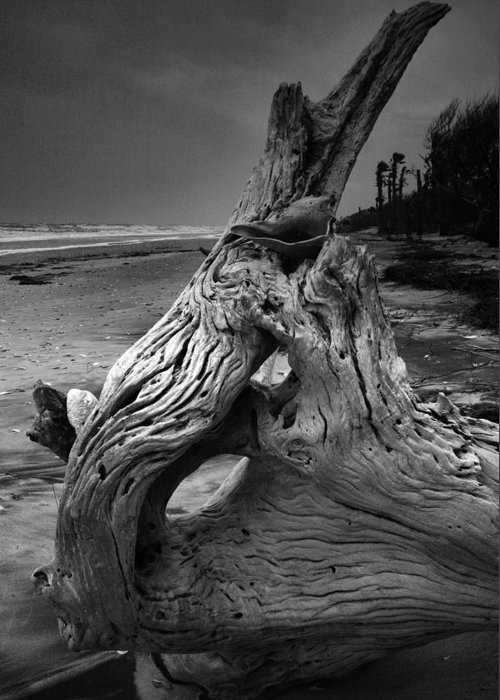 Botany Bay Greeting Card featuring the photograph Driftwood On Beach by Steven Ainsworth