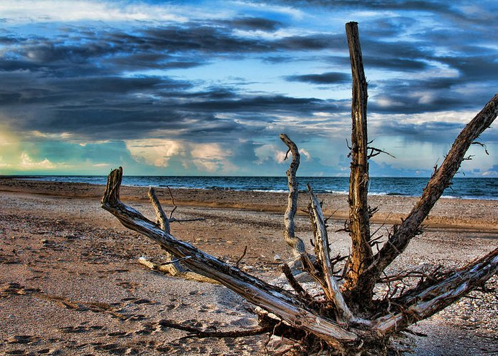 Driftwood Greeting Card featuring the photograph Driftwood V2 by Douglas Barnard