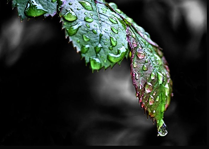 Heavy Dew Greeting Cards