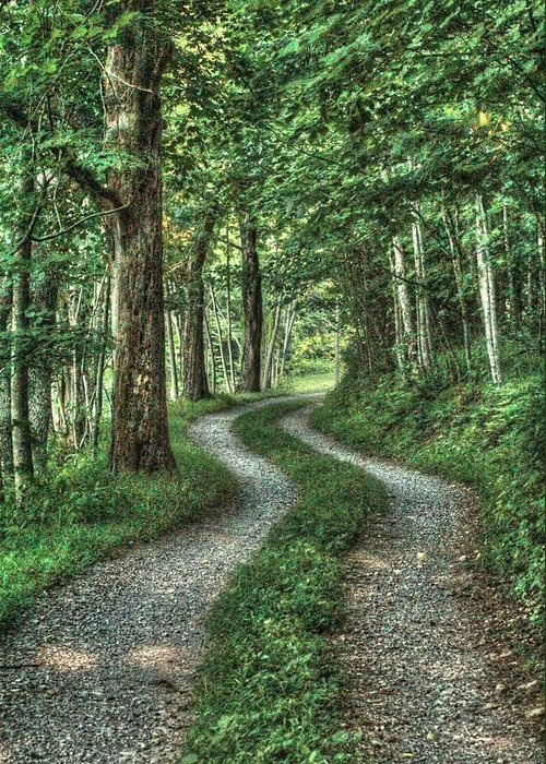 Country Lanes Greeting Card featuring the photograph Driveway Out by Heavens View Photography