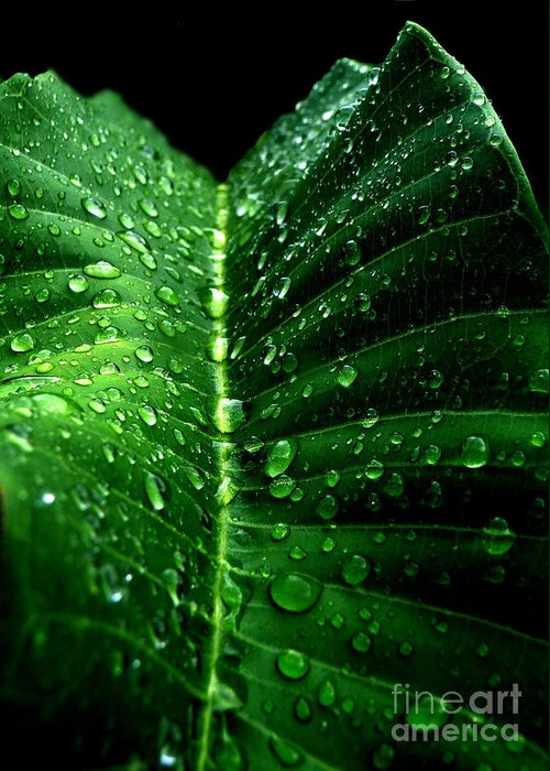 Green Leave Greeting Card featuring the photograph Drops 2 by Jose Luis Reyes
