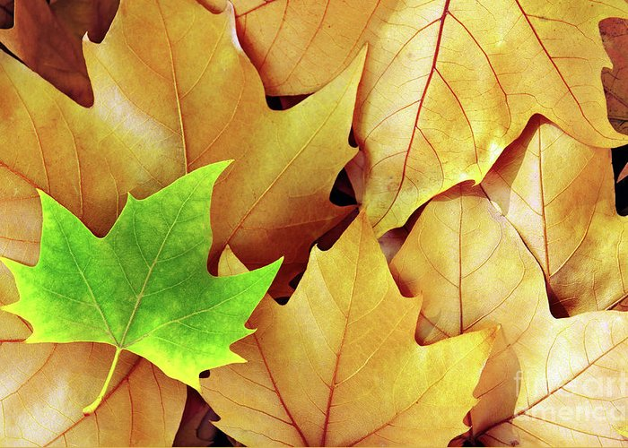 Autumn Greeting Card featuring the photograph Dry Fall Leaves by Carlos Caetano