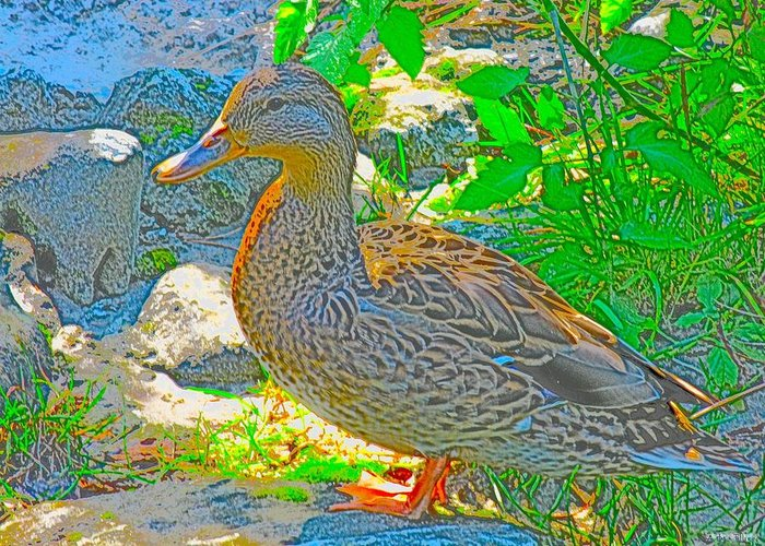 Duck Greeting Card featuring the digital art Duckside by Anastasia Pellerin
