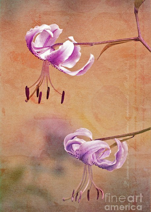 Lily Greeting Card featuring the photograph Duet 05c by Aimelle