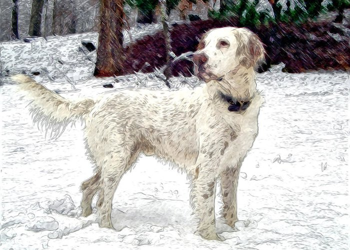 Mixed Media. Mixed Media Photography. Mixed Media Dighta Art. Mixed Media Digtal Photography. White Bird Dog Photography. Bird Dog Digtal Art. Bird Dog In Snow. Hunting Bird Dog Photography. Bird Dog Posing Photography. Bird Dog Pointing Photography. Greeting Card featuring the photograph Duke by James Steele