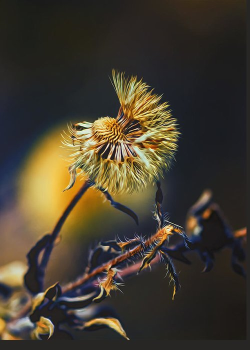 Nature Greeting Card featuring the photograph Dying Nature Glow by Bill Tiepelman
