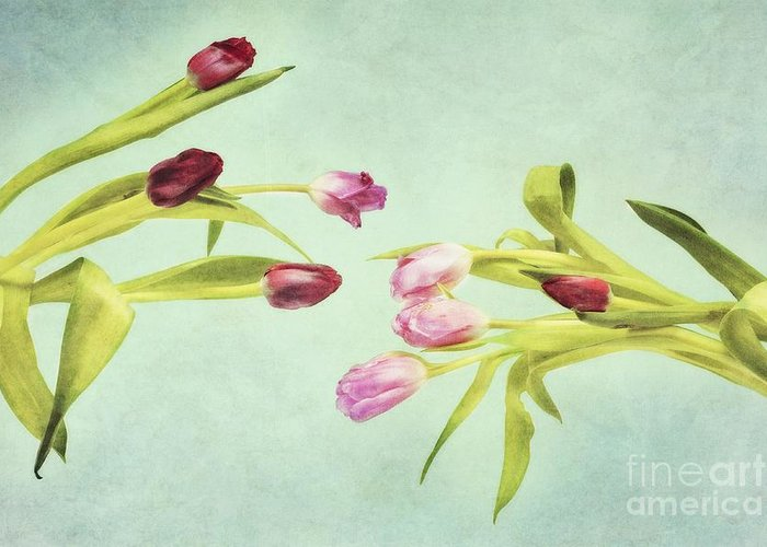Art Greeting Card featuring the photograph Eager For Spring by Priska Wettstein