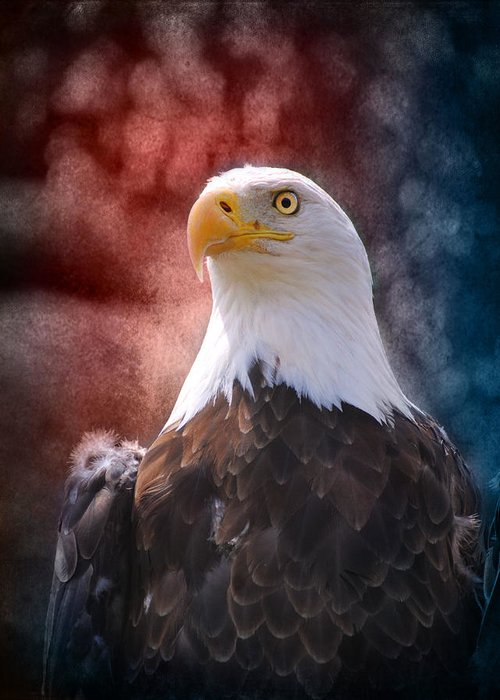 4th Of July Greeting Card featuring the photograph Eagle I by Jai Johnson