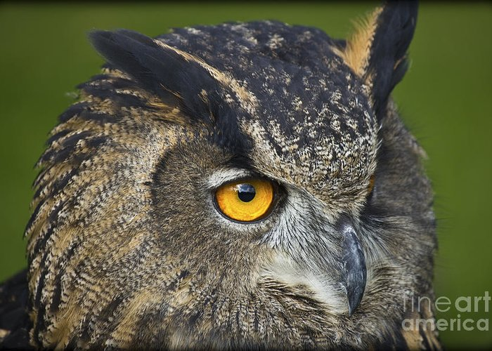 Clare Bambers Greeting Card featuring the photograph Eagle Owl 2 by Clare Bambers