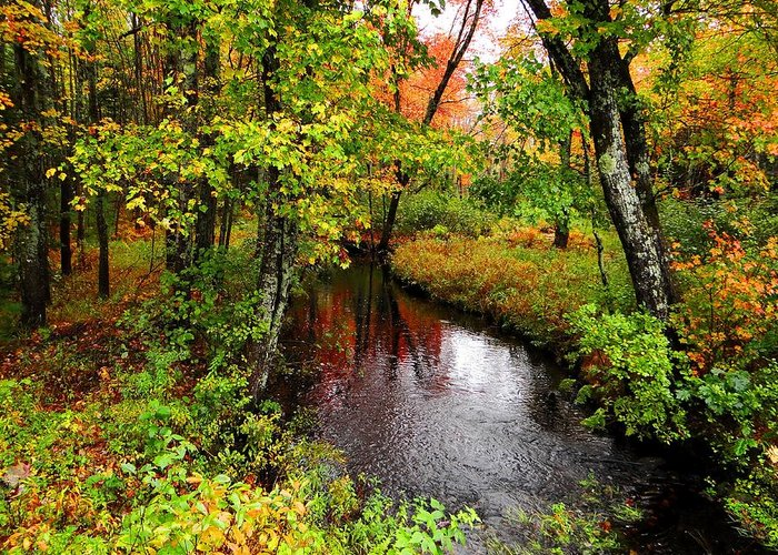 Maine Greeting Card featuring the photograph Early Autumn In Maine by Tim Canwell