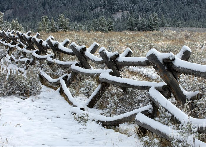 Sandra Bronstein Greeting Card featuring the photograph Early Fall Snow by Sandra Bronstein
