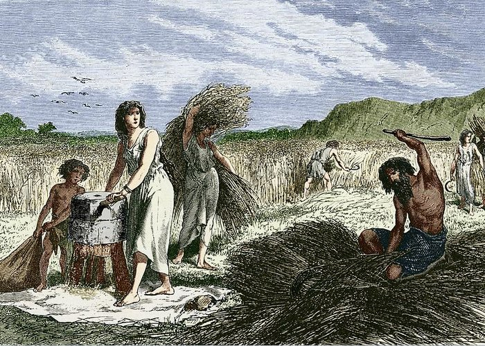 Wheat Greeting Card featuring the photograph Early Humans Harvesting Crops by Sheila Terry