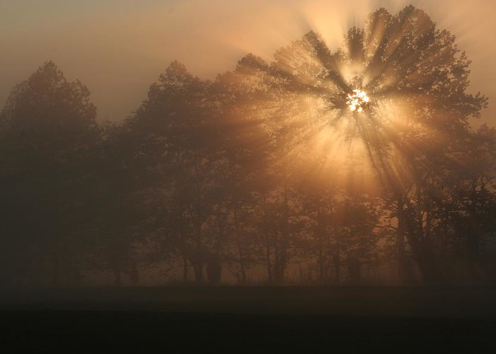Fog Greeting Card featuring the photograph Early Morning Rays by Christopher Ewing