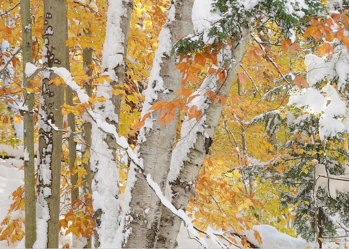 Autumn Greeting Card featuring the photograph Early Snowfall by Gerald Hiam