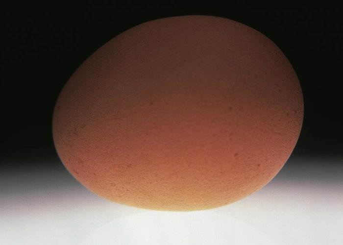Egg Greeting Card featuring the photograph Egg by Victor De Schwanberg